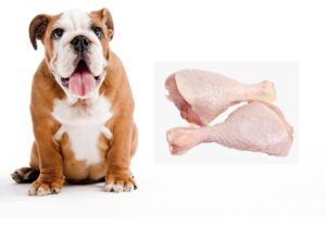 Chicken Allergies in Dogs