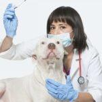 dog's normal body temperature