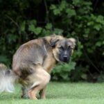 What To Do If Your Dog Doesn't Poop: Get Help For Your Dog's Constipation