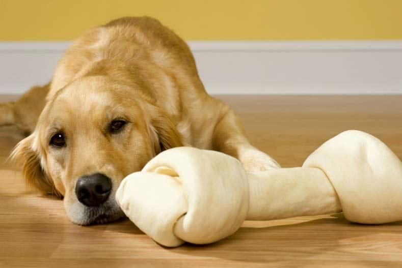 Dog Doesn't Poop